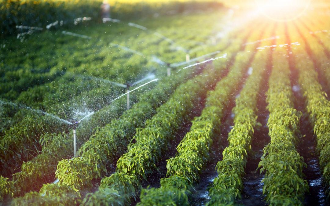 Sistemi per irrigazione giardini